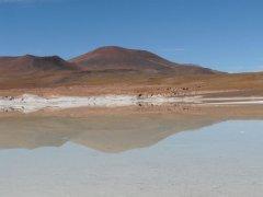 Leon_San_pedro_de_Atacama.jpg