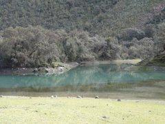 See_mit_Quinuabaeumen_bei_Huaraz.jpg